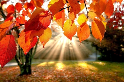 automne-hiver-nature